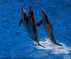 Puzle Grupo de golfinhos pulando