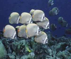 Puzle Grupo de peixes prateado