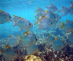 Puzle Grupo de peixes