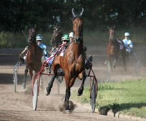 Puzle Harness racing