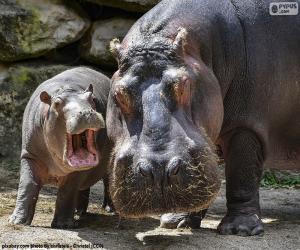 Puzle Hipopótamo ao lado de sua criação