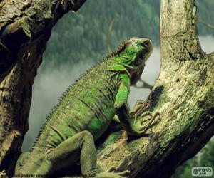 Puzle Iguana
