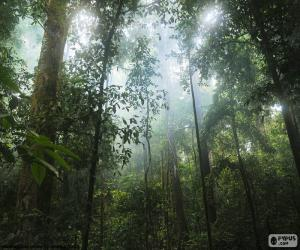 Puzle Interior da selva