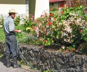 Puzle Jardineiro rega na primavera