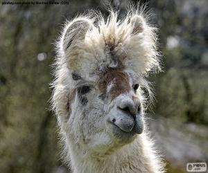 Puzle Lama, cabeça