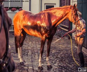 Puzle Lavar um cavalo