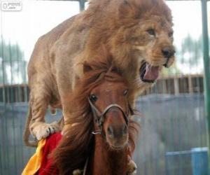 Puzle Leão e cavalo fazendo sua performance de circo