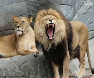 Puzle Leoa e Leão