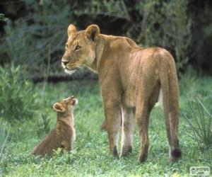 Puzle Leoa junto com seu filhote