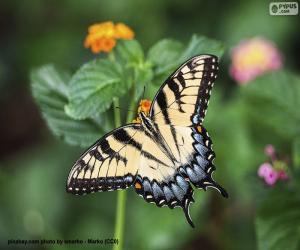 Puzle Linda borboleta com as asas completamente abertas