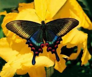 Puzle Linda borboleta em uma flor amarela