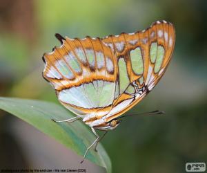 Puzle Linda borboleta