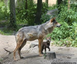 Puzle Lobo e criação