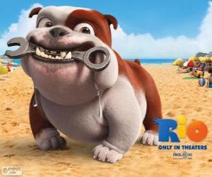Puzle Luiz, um bulldog