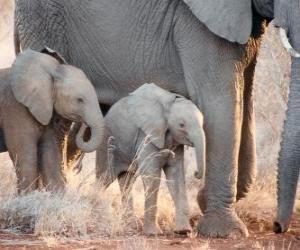 Puzle Mãe controlando o pequeno elefante