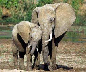 Puzle Mãe controlando o pequeno elefante, com a ajuda da sua tromba