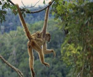 Puzle Macaco pendurado de umas lianas