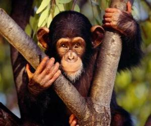 Puzle Macaco pequeno em uma árvore