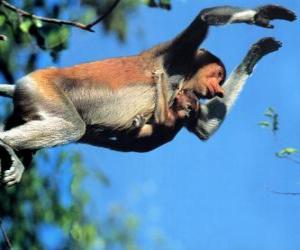 Puzle Macaco pulando