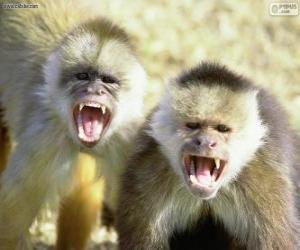 Puzle Macacos pregos
