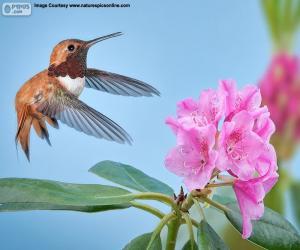 Puzle Macho beija-flor rufous e flor