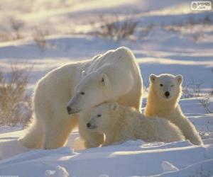 Puzle Mamãe ursa com filhotes