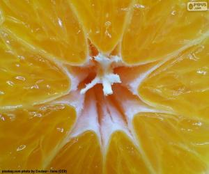Puzle Mandarina