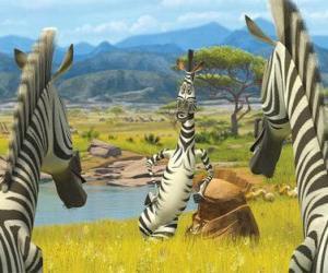 Puzle Marty conversando com outras zebras