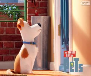 Puzle Max na frente da porta