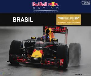 Puzle Max Verstappen, GP do Brasil 2016