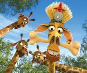Puzle Melman a girafa, disfarçada sob o olhar curioso de outras girafas