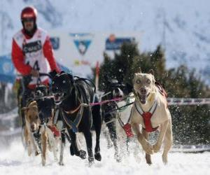 Puzle Mushing