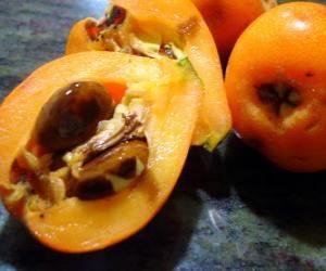 Puzle Nêspera,  também é conhecida como ameixa-amarela