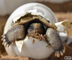 Puzle Nascimento de uma tartaruga