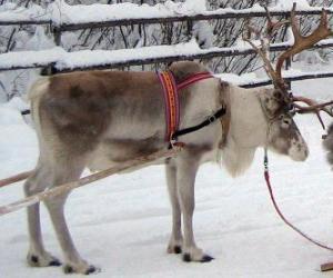 Puzle Natal renas puxando um trenó