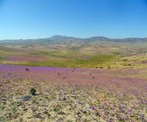 Puzle O deserto de Atacama, no Chile florida