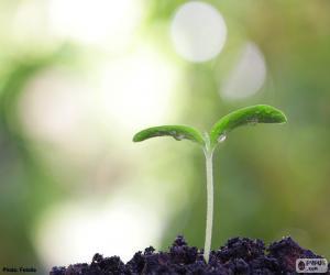 Puzle O nascimento de uma planta