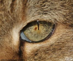 Puzle Olho de gato