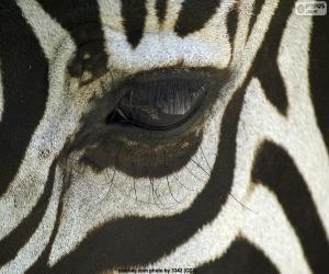 Puzle Olho de zebra