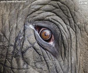 Puzle Olho do elefante