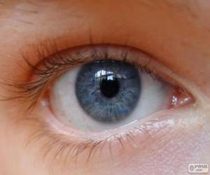 Puzle Olho humano