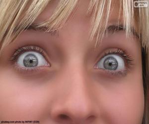 Puzle Olhos claros rosto
