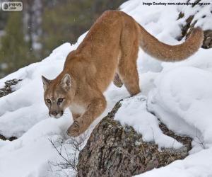 Puzle Onça-parda ou Puma andando