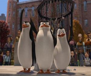 Puzle Os pingüins do zoologico de Central Park