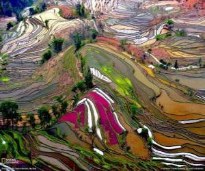 Puzle Os terraços de Yunnan, China