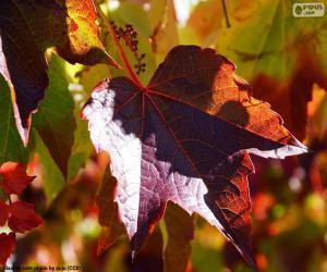 Puzle Outono na vinha