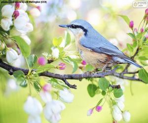 Puzle Pássaro azul celeste