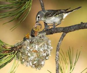 Puzle Pássaro com seus pintinhos