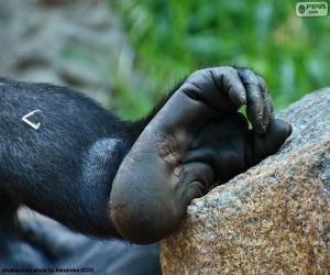Puzle Pé do gorila