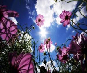 Puzle Paisagem com flores